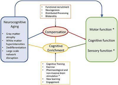 Frontiers | Cognitive Involvement in Balance, Gait and Dual