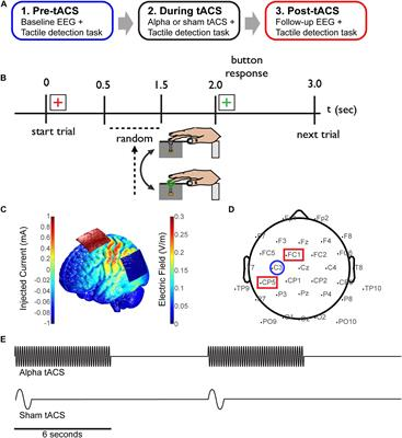 Frontiers A Prospective Study Of The Impact Of Transcranial Alternating Current Stimulation On Eeg Correlates Of Somatosensory Perception Psychology