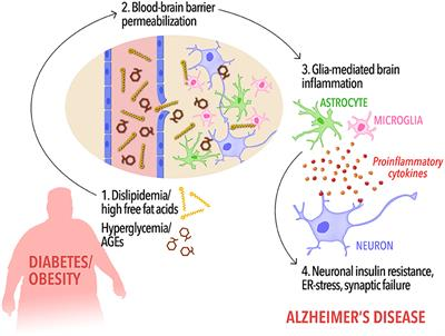 Frontiers | Insulin Resistance in Alzheimer's Disease