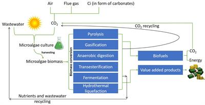 Frontiers Overview Of Carbon Capture Technology Microalgal