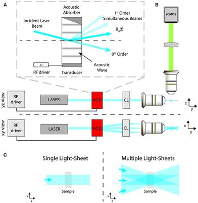 Frontiers | Flexible Multi-Beam Light-Sheet Fluorescence