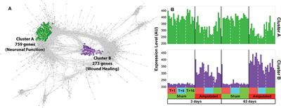 Transcriptomics Analysis of Porcine Caudal Dorsal Root Ganglia in Tail Amputated Pigs Shows Long-Term Effects on Many Pain-Associated Genes