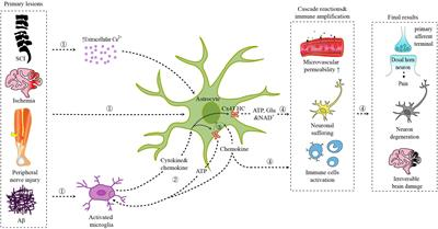 Connexin Hemichannels in Astrocytes: Role in CNS Disorders