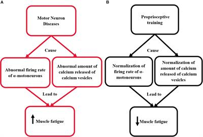 Frontiers Can Proprioceptive Training Reduce Muscle Fatigue In Patients With Motor Neuron Diseases A New Direction Of Treatment Physiology