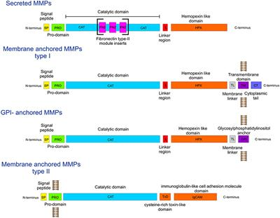 Frontiers | Mechanisms of Action of Novel Drugs Targeting