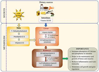 Frontiers | Vitamin D Deficiency in the Gulf Cooperation