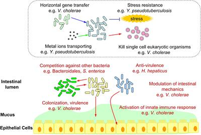 Frontiers | Confirmed and Potential Roles of Bacterial T6SSs in the