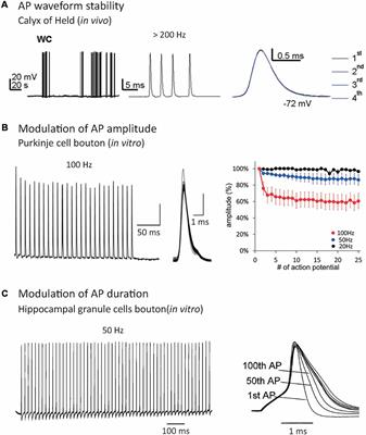 Frontiers | Past and Future of Analog-Digital Modulation of Synaptic