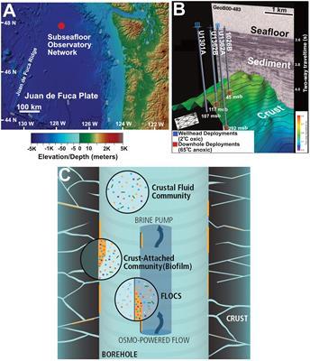Frontiers   Ecology of Subseafloor Crustal Biofilms