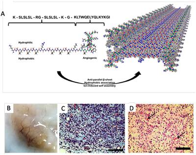 Frontiers   Peptide-Based Functional Biomaterials for Soft