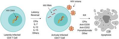 papilloma vírus és HIV