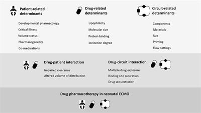 Frontiers | Drug Disposition and Pharmacotherapy in Neonatal