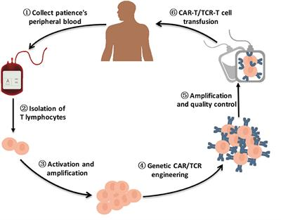 Frontiers Engineered T Cell Therapy For Cancer In The Clinic Immunology