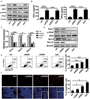 Enhanced Anti-melanoma Efficacy of a Pim-3-Targeting Bifunctional Small Hairpin RNA via Single-Stranded RNA-Mediated Activation of Plasmacytoid Dendritic Cells