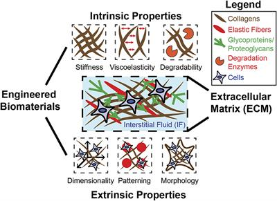 Frontiers Leveraging Biomaterial Mechanics To Improve Pluripotent Stem Cell Applications For Tissue Engineering Bioengineering And Biotechnology
