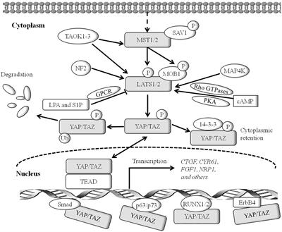 vírus hpv mst a csillárok tinktúrája a gyermekek parazitái ellen