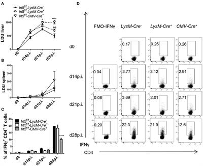 Frontiers Irf 5 Expression In Myeloid Cells Is Required