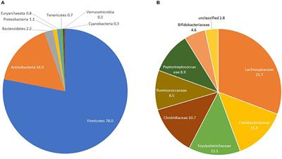 dysbiosis bél mikrobiota