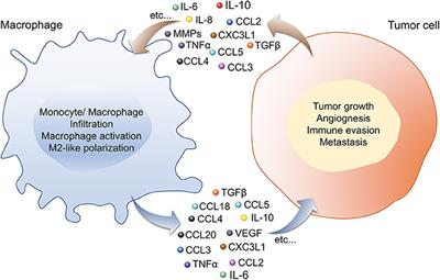 Macrophage and Tumor Cell Cross-Talk Is Fundamental for Lung Tumor Progression: We Need to Talk