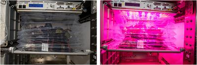 Microbiological and Nutritional Analysis of Lettuce Grown on the ISS