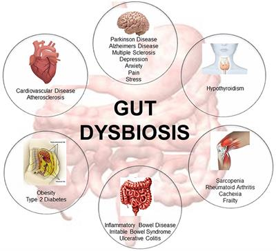 dysbiosis of the gut