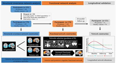 Structural Covariance Network Disruption and Functional Compensation in Parkinson's Disease