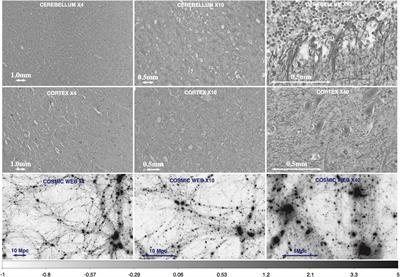The Quantitative Comparison Between the Neuronal Network and the Cosmic Web