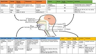 hpv non genital viermi medicamente pentru adulți