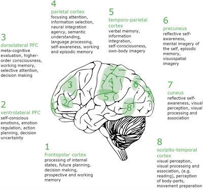 Lucid Dreaming Brain Network Based on Tholey's 7 Klartraum Criteria