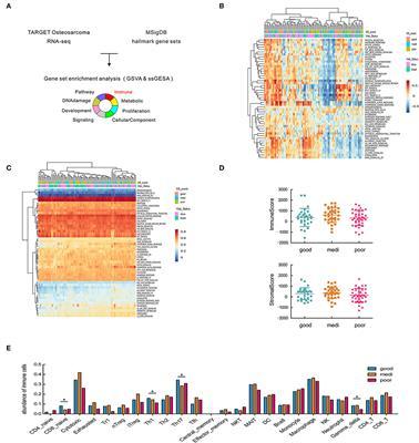 Immune Landscape of the Tumor Microenvironment Identifies Prognostic Gene Signature CD4/CD68/CSF1R in Osteosarcoma