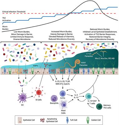 helminth tuberculosis co infection an immunologic perspective