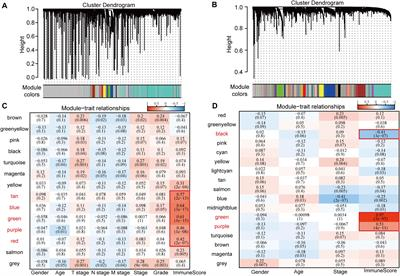A Molecular Subtype Model for Liver HBV-Related Hepatocellular Carcinoma Patients Based on Immune-Related Genes