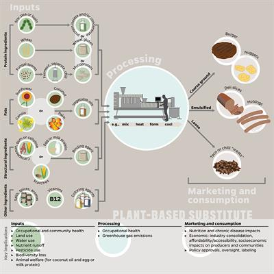 Considering Plant-Based Meat Substitutes and Cell ... - Frontiers