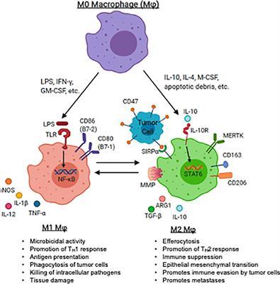 sarcoma cancer articles
