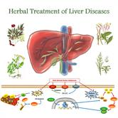 Herbal Medicines in the Treatment of Liver Diseases - Efficacy