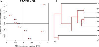 The Dynamic Distribution Of Small Tail Han Sheep Microbiota Across Different Intestinal Segments