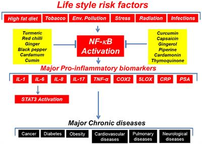 Frontiers | Inflammation, a Double-Edge Sword for Cancer and