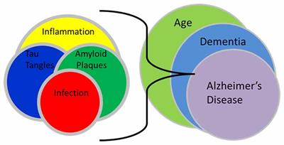 Frontiers | Chlamydia pneumoniae: An Etiologic Agent for
