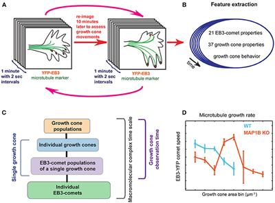 Frontiers | Neuronal Growth Cone Size-Dependent and -Independent