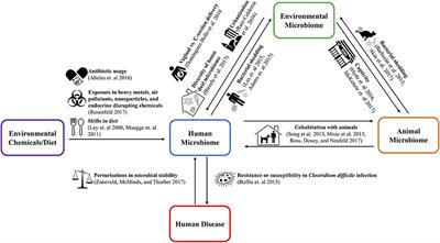 Frontiers in public health one health relationships between human animal and environmental microbiomes a mini review fandeluxe Image collections