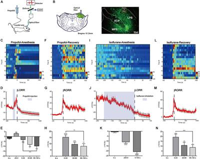 frontiers parabrachial neurons promote behavior  electroencephalographic arousal