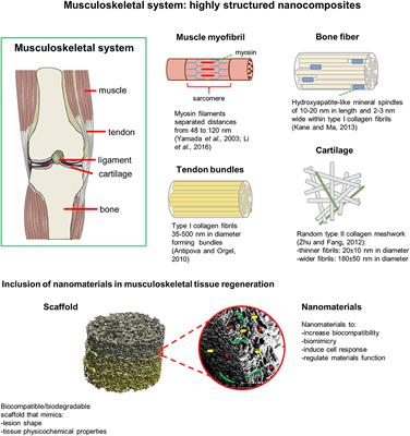 Frontiers | Producing 3D Biomimetic Nanomaterials for