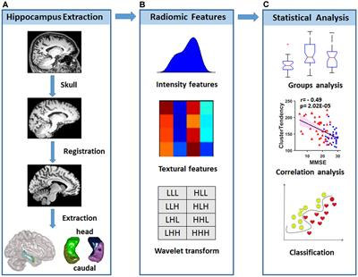 Frontiers | Radiomic Features of Hippocampal Subregions in
