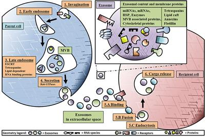 Frontiers | Exosomes: Basic Biology and Technological