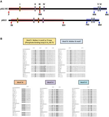 Frontiers | Identification of Amino Acids Essential for