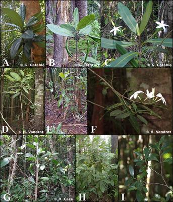 Frontiers | Evolution of Plant Architecture, Functional