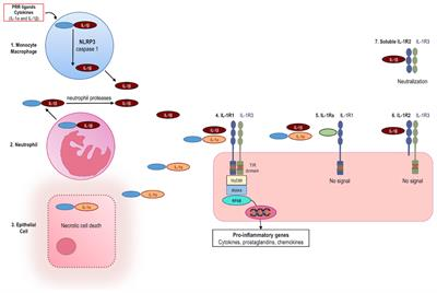 Frontiers | Anakinra Therapy for Non-cancer Inflammatory