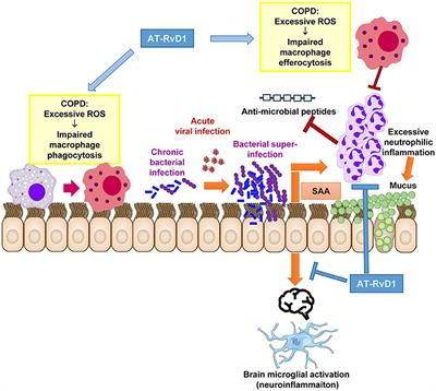 Frontiers | Resolving Viral-Induced Secondary Bacterial