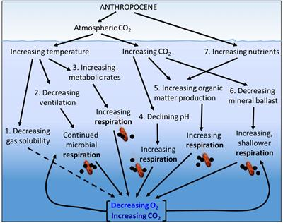 Frontiers   Microbial Respiration, the Engine of Ocean Deoxygenation