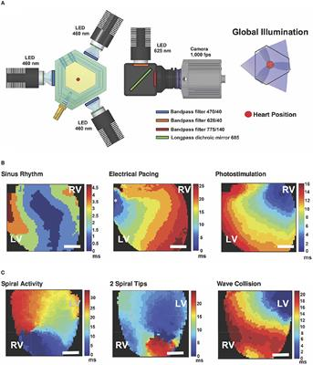 Frontiers | Energy-Reduced Arrhythmia Termination Using Global